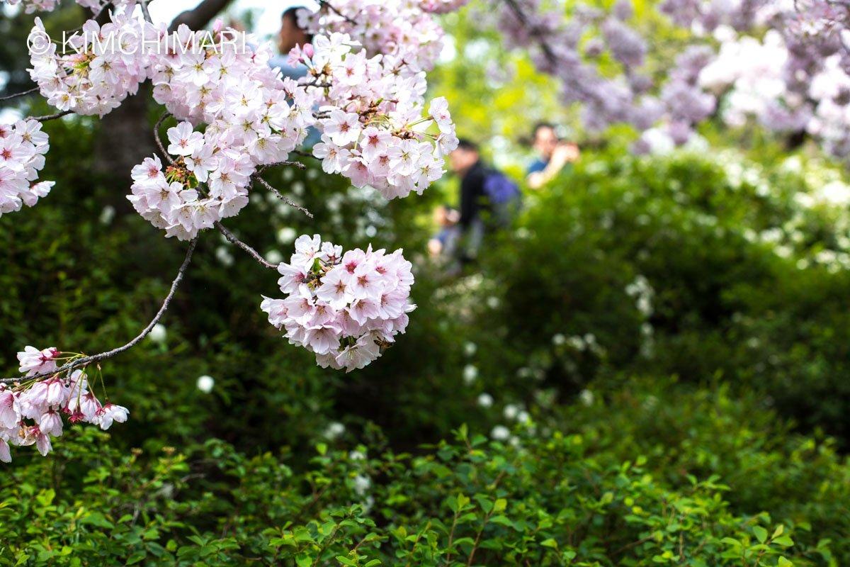 Spring Tree at Hakone Gardens